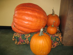 HUGE Pumpkin!